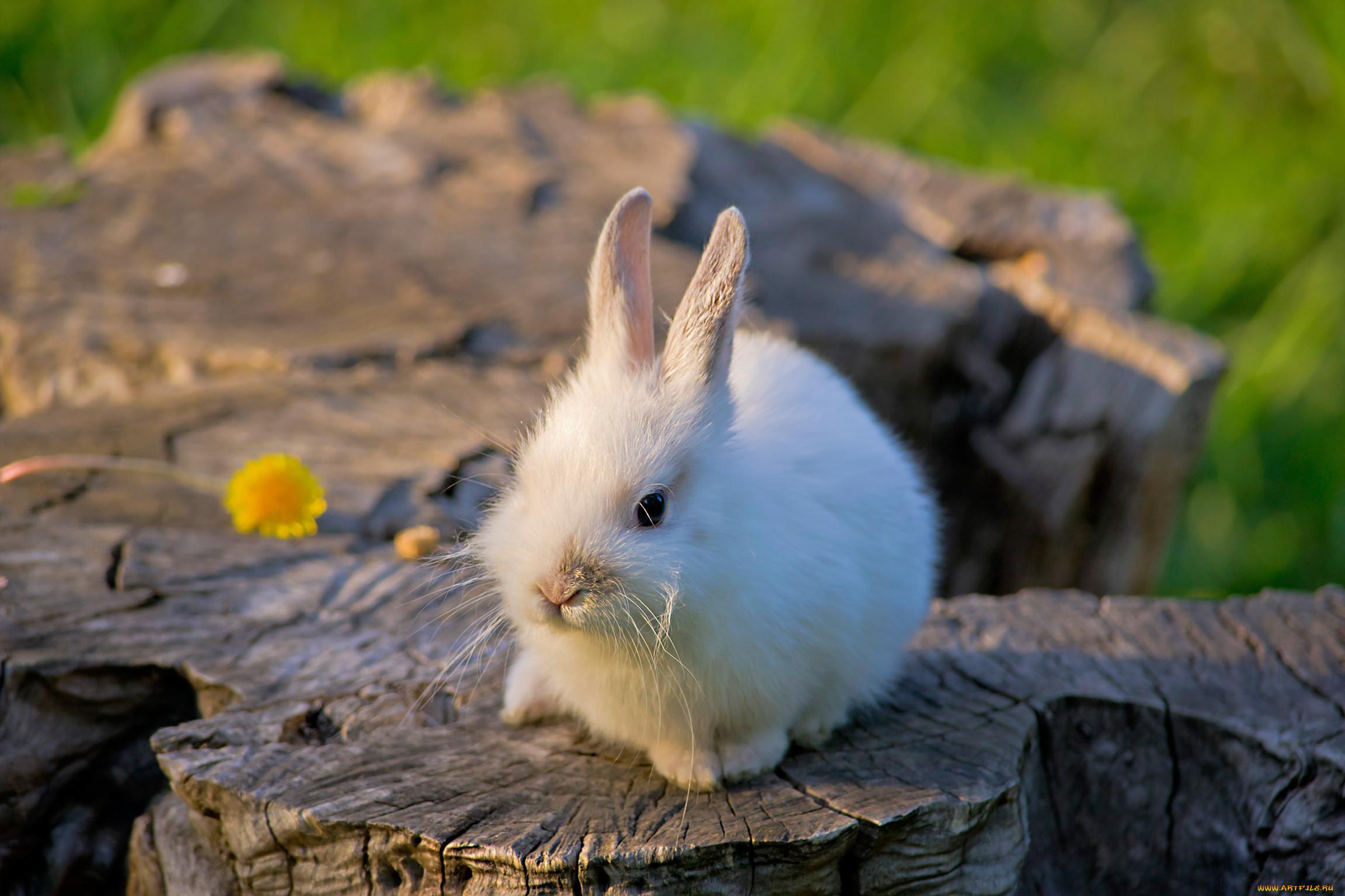 картинки про зайцев красивые родителям друга